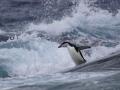 Jan2020_GibbsIsland_Antarctic-163