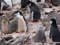 Jan2020_GibbsIsland_Antarctic-202