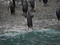 Jan2020_GibbsIsland_Antarctic-238