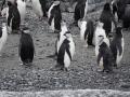 Jan2020_GibbsIsland_Antarctic-240