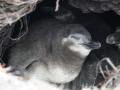Jan2020_Falkland_CypsyCove-015