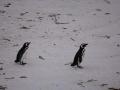 Jan2020_Falkland_CypsyCove-029