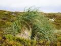 Jan2020_Falkland_CypsyCove-047