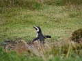 Jan2020_Falkland_CypsyCove-061