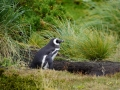 Jan2020_Falkland_CypsyCove-063
