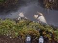 Jan2020_Falkland_CypsyCove-081