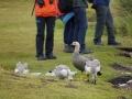 Jan2020_Falkland_CypsyCove-087
