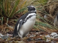 Jan2020_Falkland_CypsyCove-104