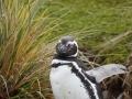 Jan2020_Falkland_CypsyCove-111