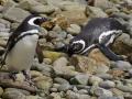 Jan2020_Falkland_CypsyCove-122