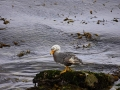 Jan2020_Falkland_CypsyCove-155