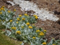 Jan2020_Falkland_CypsyCove-187