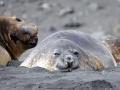 Jan2020_HannahPoint_Antarctic-002