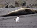 Jan2020_HannahPoint_Antarctic-007