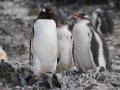 Jan2020_HannahPoint_Antarctic-023