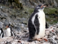Jan2020_HannahPoint_Antarctic-024