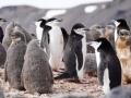 Jan2020_HannahPoint_Antarctic-030