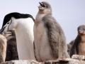Jan2020_HannahPoint_Antarctic-035