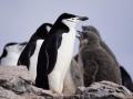 Jan2020_HannahPoint_Antarctic-036