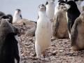 Jan2020_HannahPoint_Antarctic-046