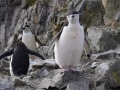 Jan2020_HannahPoint_Antarctic-050