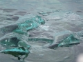 Jan2020_KinnesCove_Antarctic-048