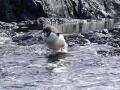Jan2020_KinnesCove_Antarctic-106