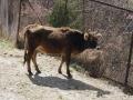 MonasterysBumthang2019-03- -074