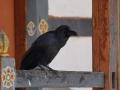MonasterysBumthang2019-03- -079