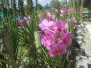 Kuching - Orchideengarten