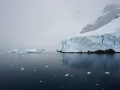 Jan2020_LemaireChannel_Antarctic-087