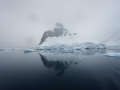 Jan2020_LemaireChannel_Antarctic-093