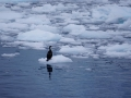 Jan2020_LemaireChannel_Antarctic-100