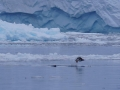 Jan2020_NekoHarbour_Antarctic-034