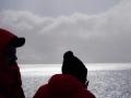 Jan2020_PointWild_Antarctic-006