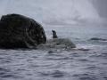 Jan2020_PointWild_Antarctic-053