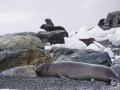 Jan2020_PointWild_Antarctic-054
