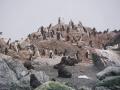 Jan2020_PointWild_Antarctic-060