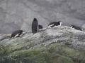 Jan2020_PointWild_Antarctic-061