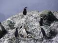 Jan2020_PointWild_Antarctic-099