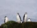 Jan2020_PointWild_Antarctic-110