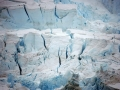 Jan2020_PointWild_Antarctic-136