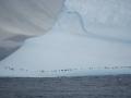 Jan2020_PointWild_Antarctic-190