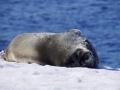 Jan2020_PortalPoint_Antarctic-014