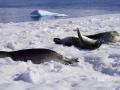 Jan2020_PortalPoint_Antarctic-084