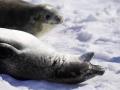 Jan2020_PortalPoint_Antarctic-085