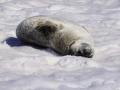 Jan2020_PortalPoint_Antarctic-093