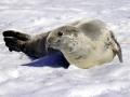Jan2020_PortalPoint_Antarctic-099