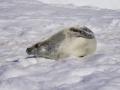 Jan2020_PortalPoint_Antarctic-102