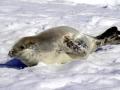Jan2020_PortalPoint_Antarctic-104